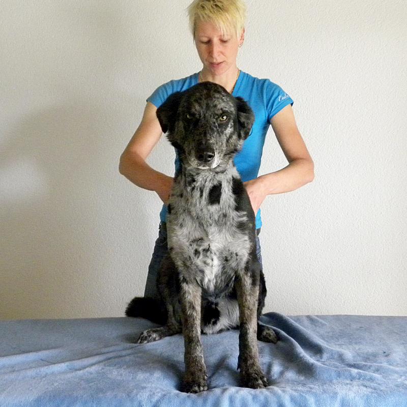 hund-osteopathie