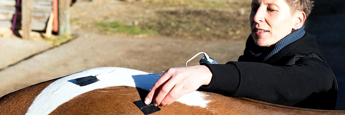 tens-elektrotherapie-pferd