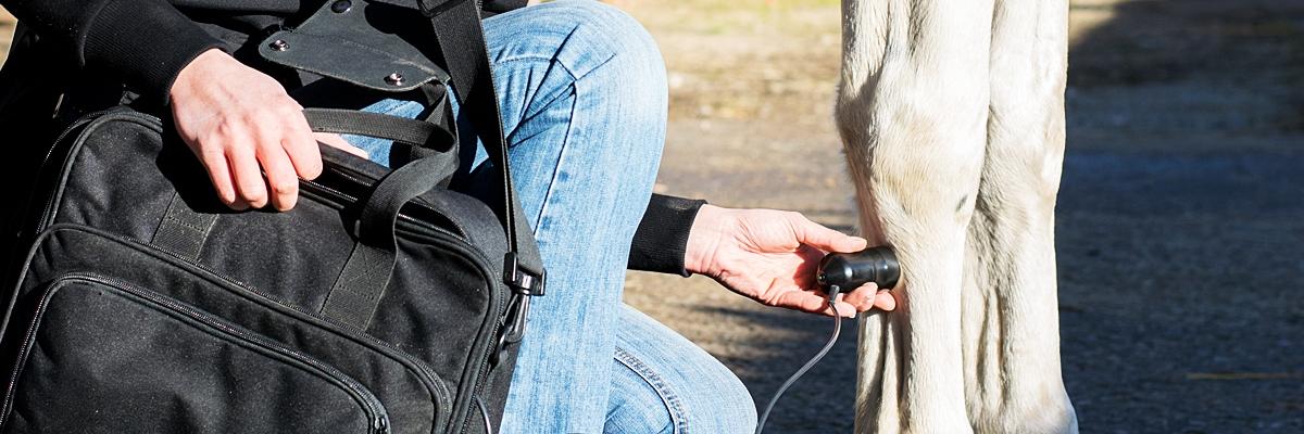 ultraschall-therapie-bei-pferd-und-hund